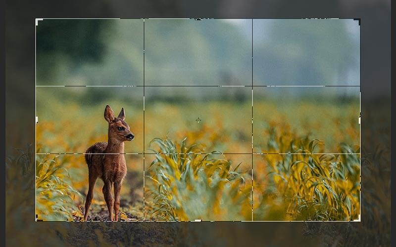 切り抜きツールを使って直感的な操作でカンバスサイズを変更する方法【photoshop(フォトショップ)】